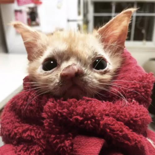 Eine ganz besondere Katze