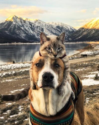 Ein Abenteuer in der Wildnis