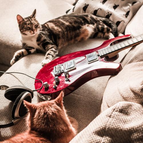 Ein Metal-Sampler für Katzen