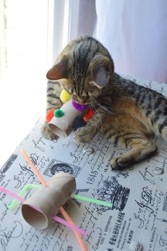 Häufig Katzenspielzeug, das du ganz einfach und günstig selber basteln kannst KZ94