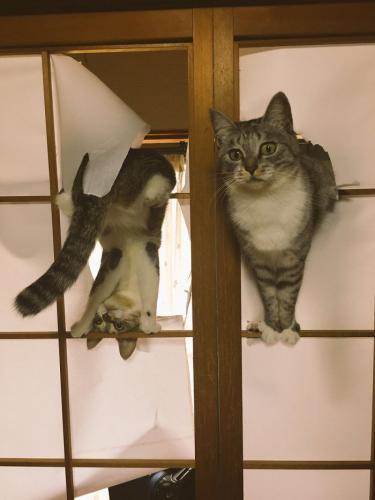 """""""Vielleicht war es nicht so eine clevere Idee, sich japanische Türen anzuschaffen"""""""