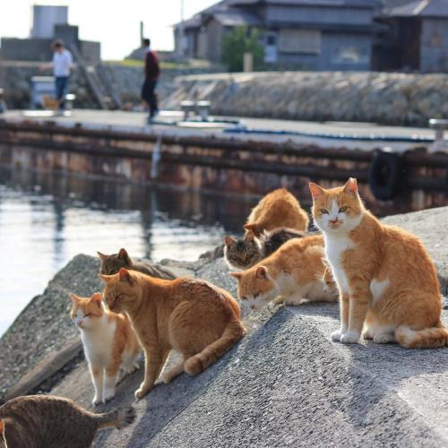Aoshima, die japanische Katzeninsel