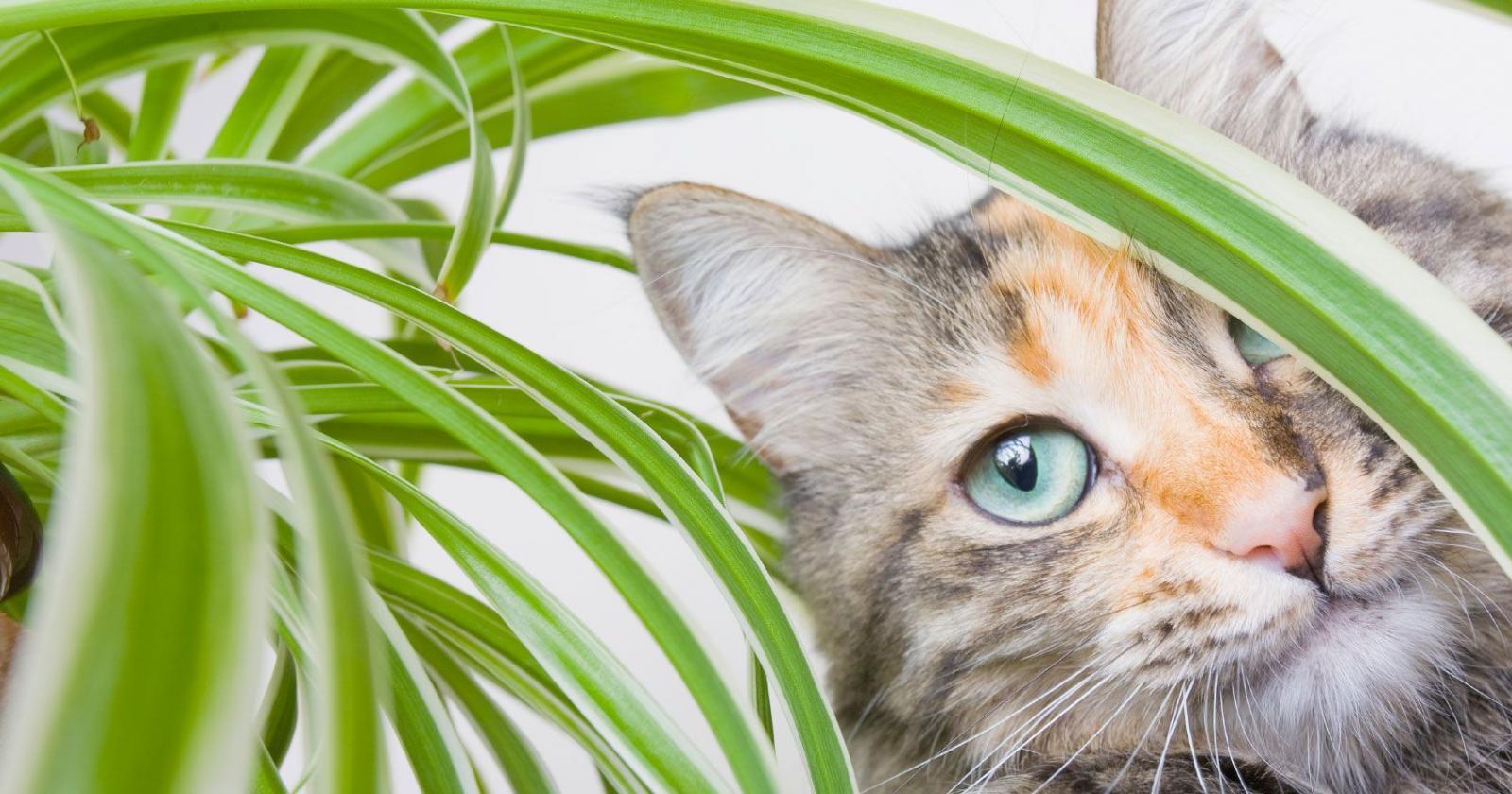 Diese zimmerpflanzen sind giftig f r unsere fellnasen - Zimmerpflanzen giftig ...