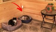 Diese Katze macht sich Sorgen, als ihr kleiner Mensch anfängt zu niesen...