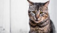 So verabreichst Du deiner Katze Medizin (ohne dass jemand verletzt wird)