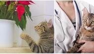 Horrormonat Dezember: Wie deine Katze die Feiertage gut übersteht