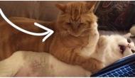 Meine Katze ist zu dick, was kann ich tun?