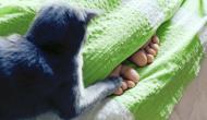 Selbstgemachtes oder gekauftes Katzenfutter: Das ist besser für Eure Katze