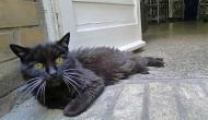 """Buff Cat - Eine """"Mucki Katze"""" inspiriert das Internet"""