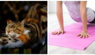 Tipps für die Pflege von Katzenomas und -Opas