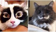 8 Anzeichen, dass deine Katze Dich (sehr) liebt