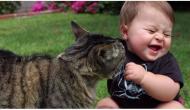 Wenn eure Katze das macht, solltet ihr schnell einen Tierarzt aufsuchen