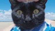 Das Interview dieses Mädchens mit ihrer Katze ist einfach nur zu süß