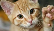 Katzen sind verrückt - darum lieben wir sie!