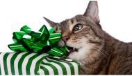 """Jetzt kannst Du deine Katze """"lecken"""" 😹 dank """"LICKY Brush"""""""