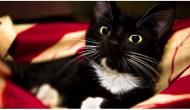 Diese Katze akzeptierte nur Futter in Tüten. Als man ihr folgte, fand man den herzzerreißenden Gr...