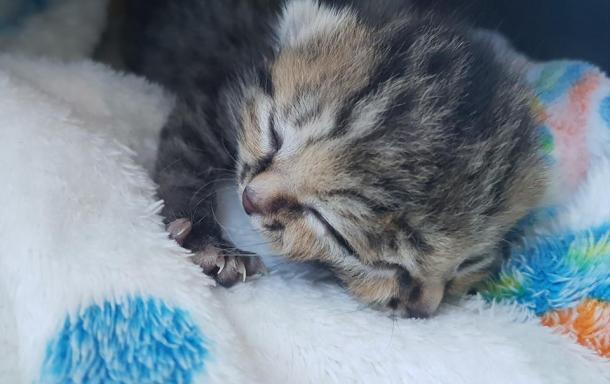 Ein ganz besonderes Kätzchen