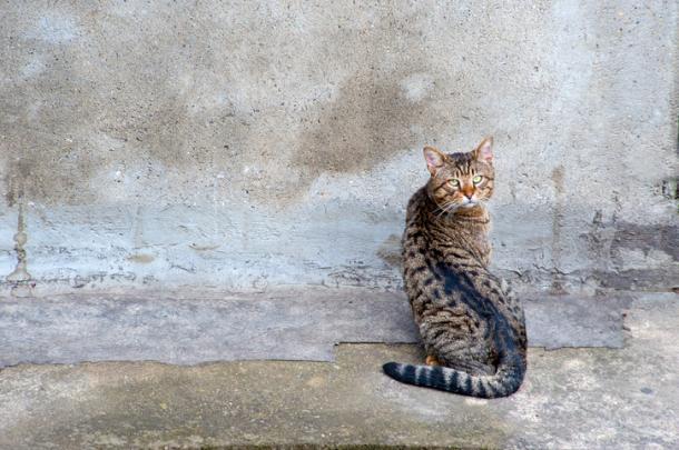 Wenn Katzen ihren Kopf gegen die Wand lehnen...