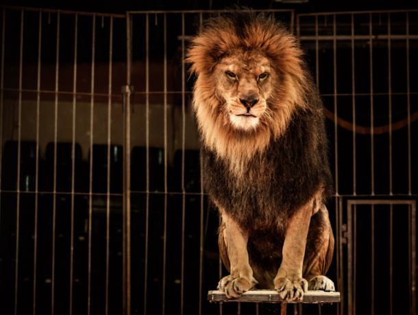 Keine wilden Tiere mehr!