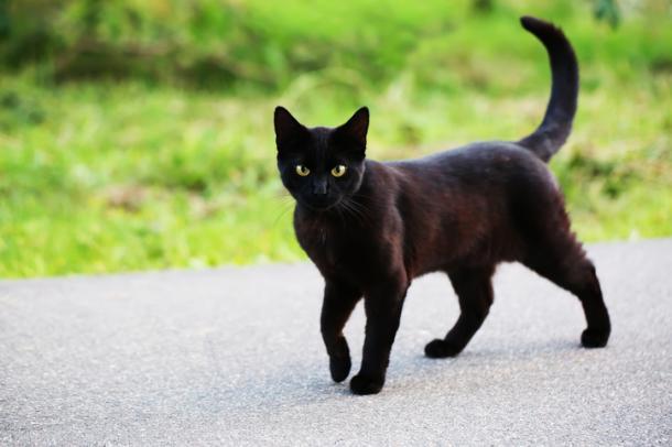 Panther in Gefahr