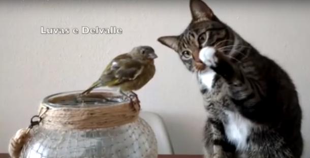 Katze und Piepmatz