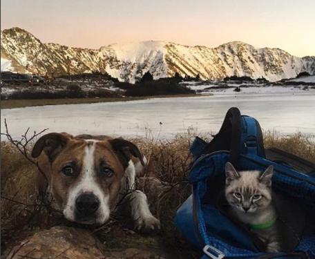 Diese KATZE und dieser HUND erlebten ein unglaubliches Abenteuer zusammen