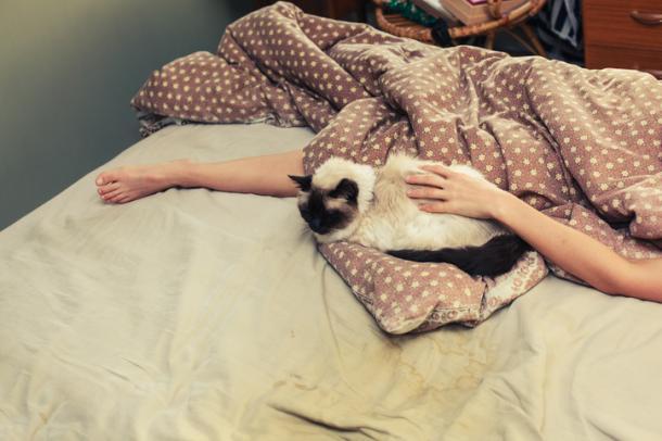 Schlafenszeit, Kätzchen!