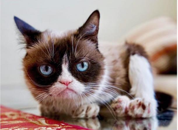 Die berühmteste Katze der Welt