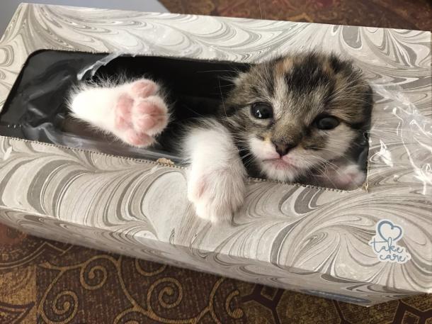 Nachdem sie zwei Stunden nach ihrer Katze gesucht hatte, fand das Mädchen ihre Katze in der Taschentuchschachtel.