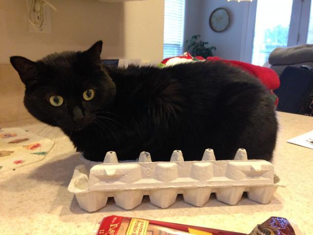 """""""Natürlich ist das bequem hier. Ich mag die Form dieses Kartons"""""""