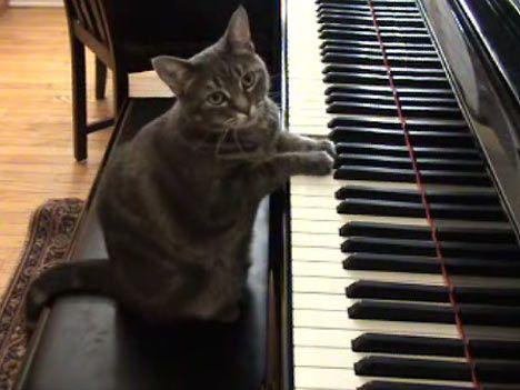 Musik für Katzen