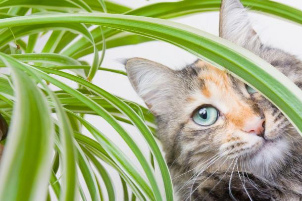 Warum Katzen Grünzeug essen