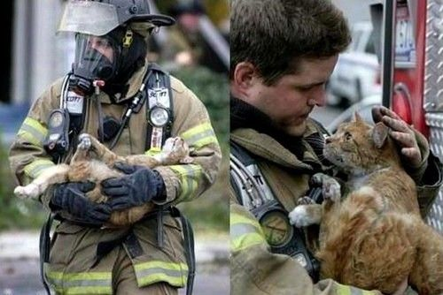 Diese Katze wird ihrem Retter vermutlich ewig dankbar sein