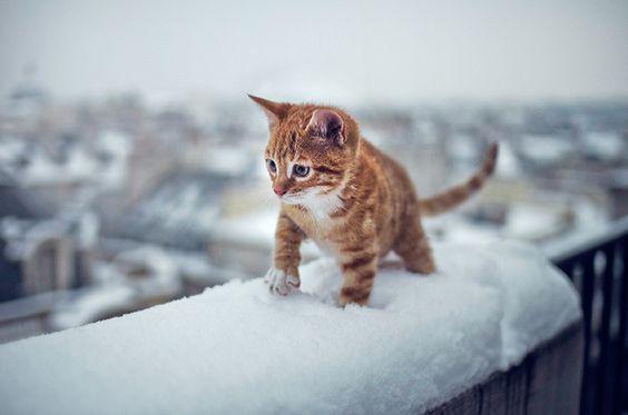 SCHNEE: Wir ihr eure Katze perfekt ausstattet