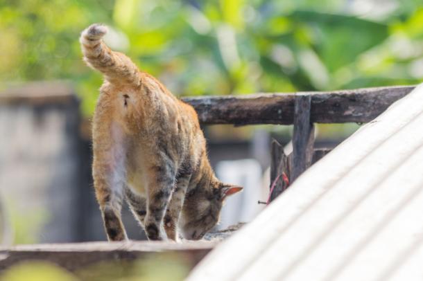 Komische Katzengebräuche