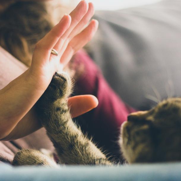 Die Persönlichkeit einer Katze