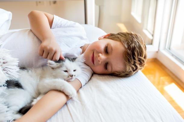 Katzen fördern die Achtung und den Respekt vor anderen