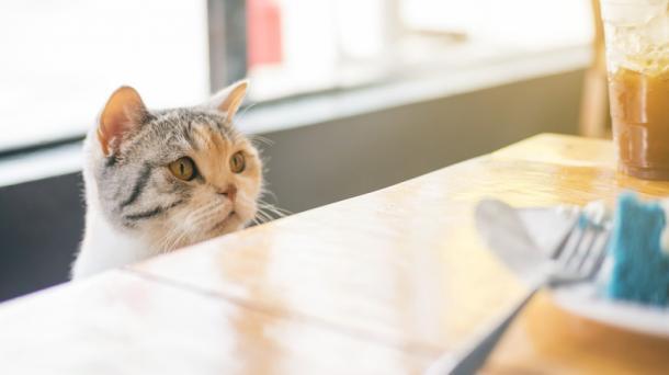 Katze Zubereiten