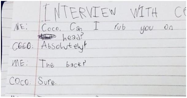 Ein Interview mit einer Katze