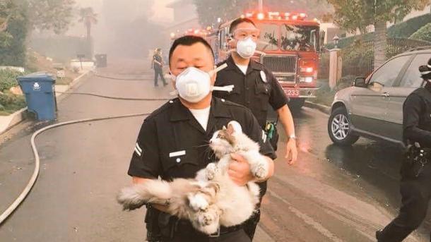 Das Bild dieser Rettung geht um die Welt
