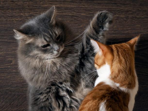 Katzenbeziehungen