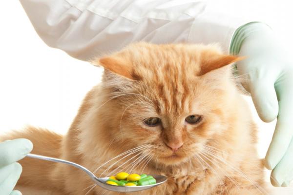 Kätzchen, es ist Zeit für deine Wurmkur