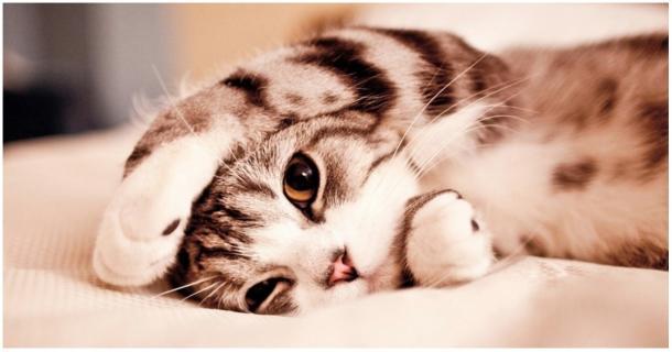 Deine Katze könnte krank sein, ohne dass du es weißt