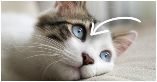 Kann meine Katze tatsächlich im DUNKELN sehen?