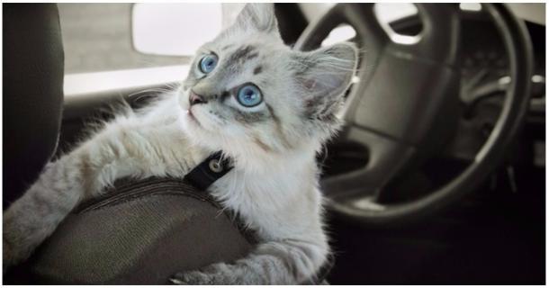 Tipps für eine entspannte Autofahrt mit Deiner Katze