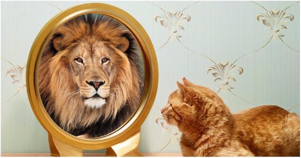 Studien bestätigen: Deine Katze hält sich für einen Löwen