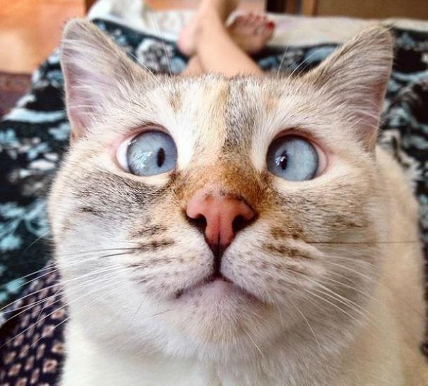 Schielende Katze