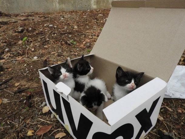 Verlassene Kätzchen