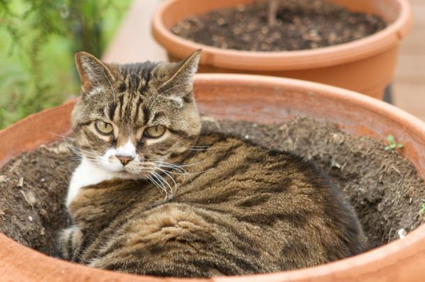 Pflanzen und Katzen: Mission impossible