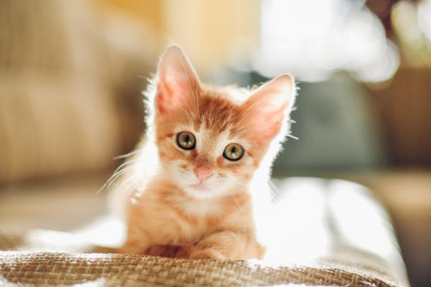 Katzensternzeichen